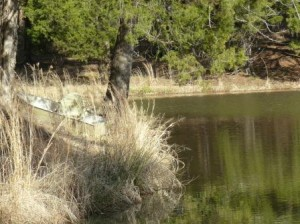 boat in high grass by lake for blog