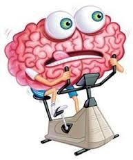 brain on cycle