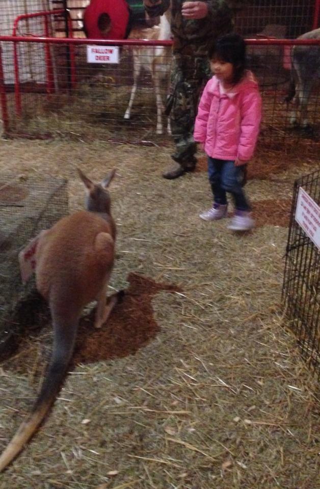 Grace kangaroo