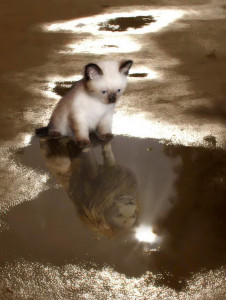 cat-sees-her-lion-reflection1
