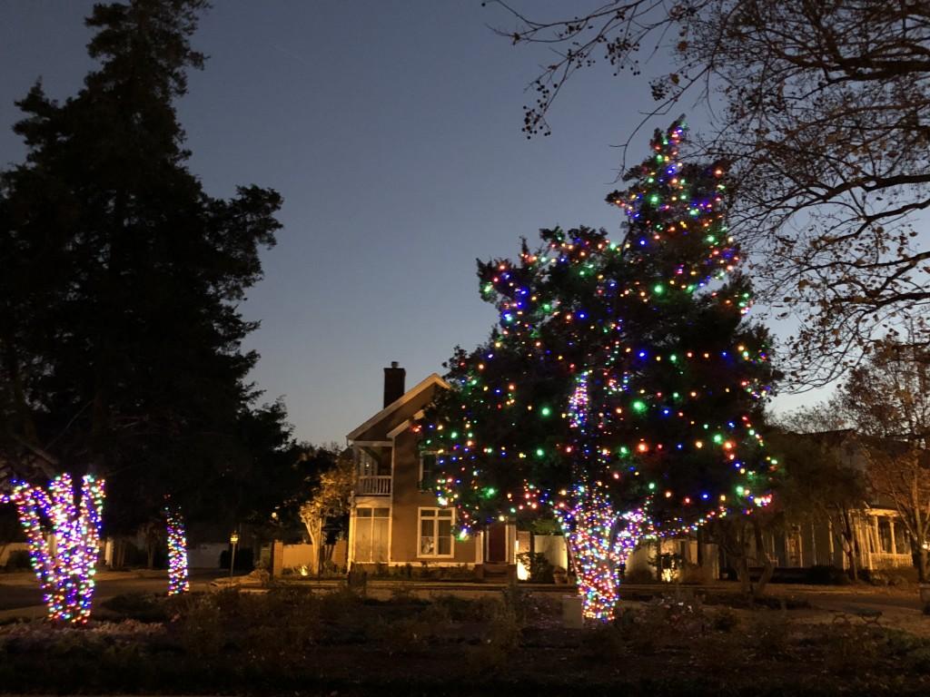 Christmas Tree Park