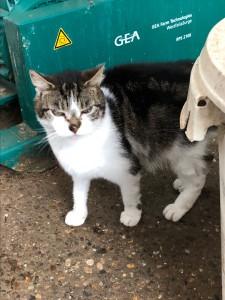 Cat in Kinderdijk